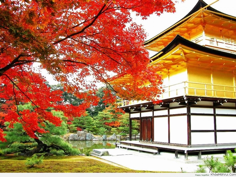 Đặt tour du lịch Nhật Bản tháng 11 khởi hành từ TPHCM