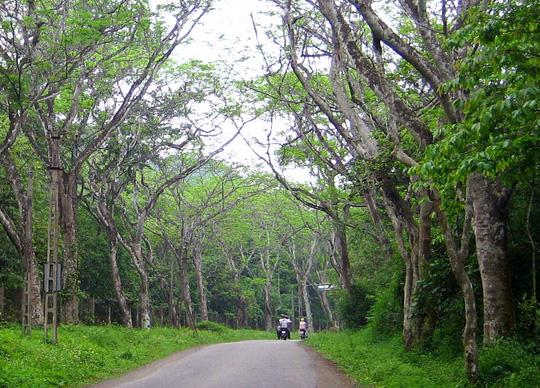 tour vườn quốc gia Cúc Phương