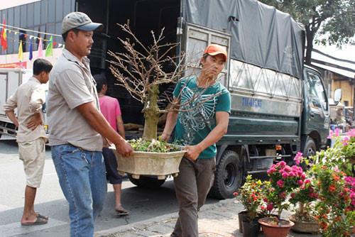 Dịch vụ vận chuyển cây cảnh, cây hoa Tết an toàn, đúng kỹ thuật