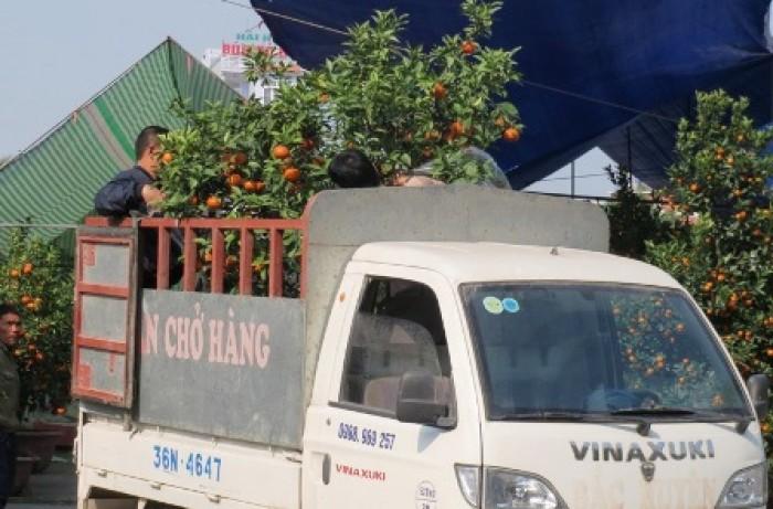 Vận chuyển cây cảnh bằng xe tải