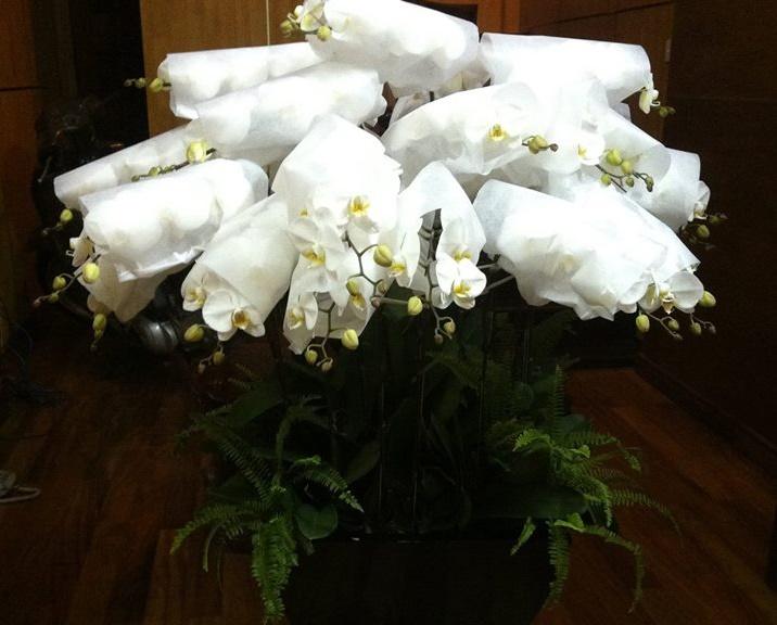 Đóng gói hoa lan