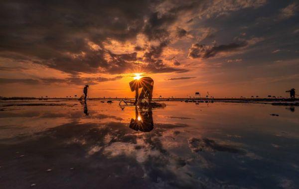 Trải nghiệm, khám phá rừng ngập mặn Xuân Thủy, Nam Định khi mùa chim về