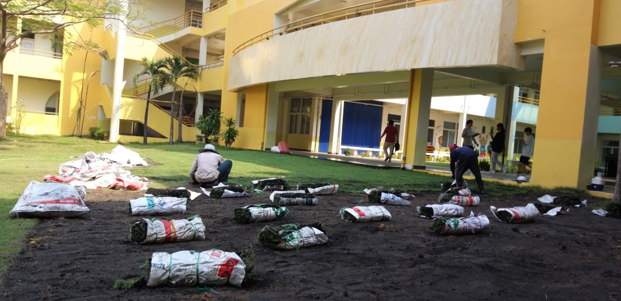 Báo giá thi công thảm cỏ nhung Nhật - DichVuMuaBanNhanh