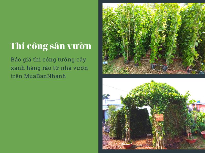 Báo giá thi công tường cây xanh hàng rào từ nhà vườn trên MuaBanNhanh