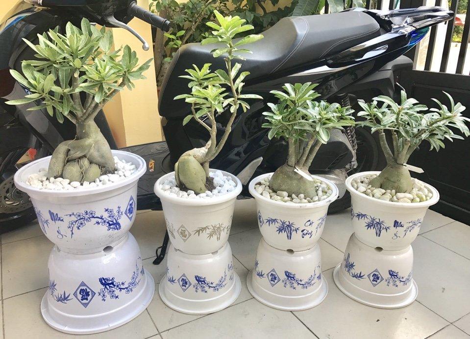 Hợp tác tìm đại lý chậu nhưạ trồng hoa chậu nhựa tròn