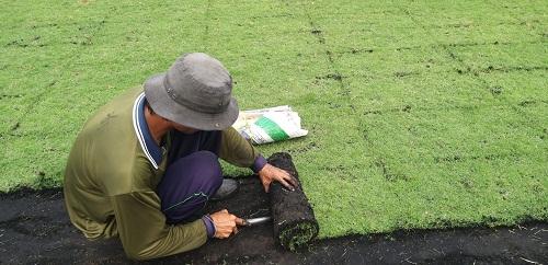 Báo giá trồng cỏ nhung Nhật Đức Tiến Phát