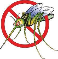 Dịch vụ phun muỗi hiệu quả tại các khu vực Hà Nội