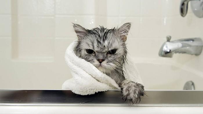 Dịch vụ tắm và Spa cho mèo - Meo Grooming Buôn mê Thuột