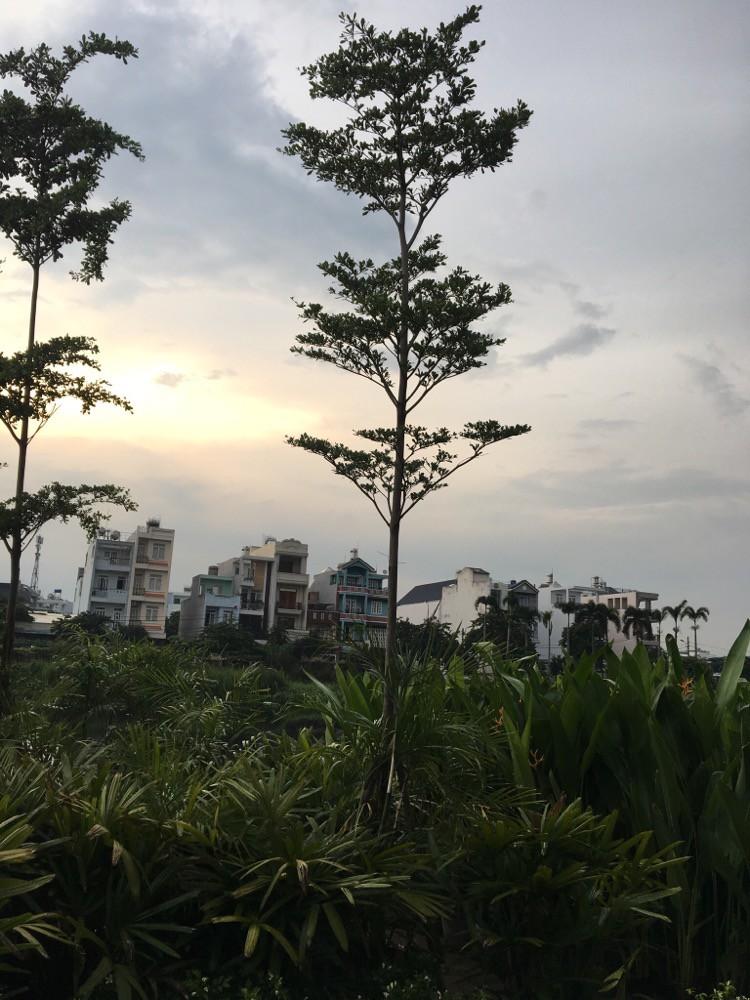 Mua bán, thi công và chăm sóc cây cảnh