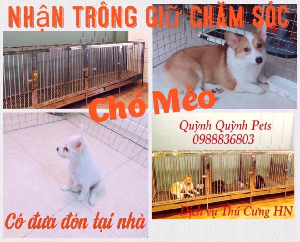 Nhận trông giữ chăm sóc chó mèo Hà Nội
