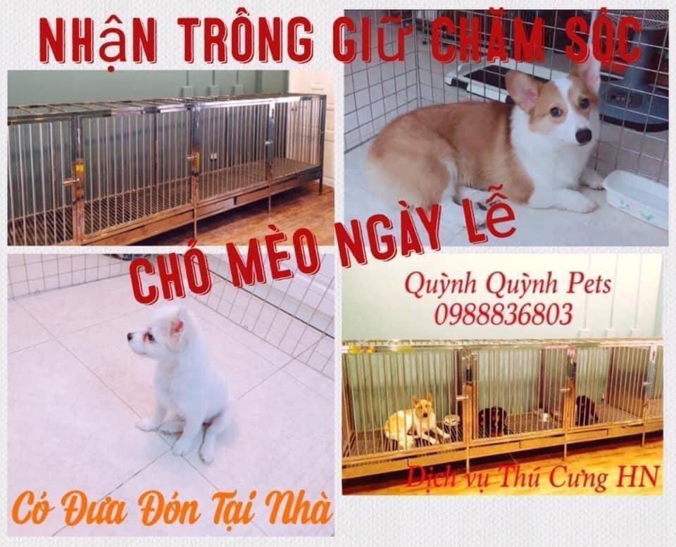 Khách sạn thú cưng trông giữ chăm sóc chó mèo Hà Nội