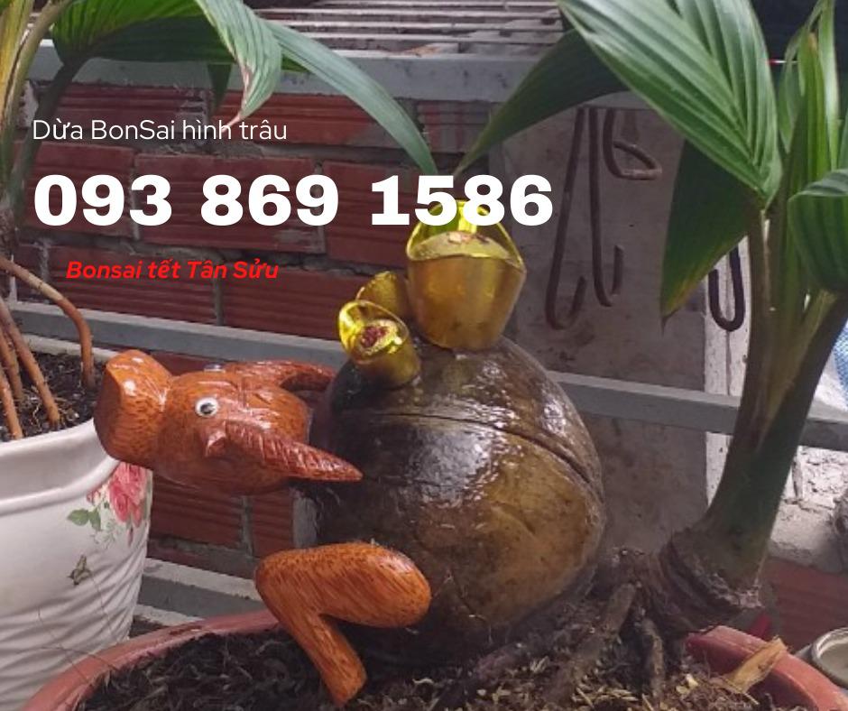 Dừa kiểng dừa bon sai hình linh vật 12 con giáp sản xuất theo đơn đặt hàng