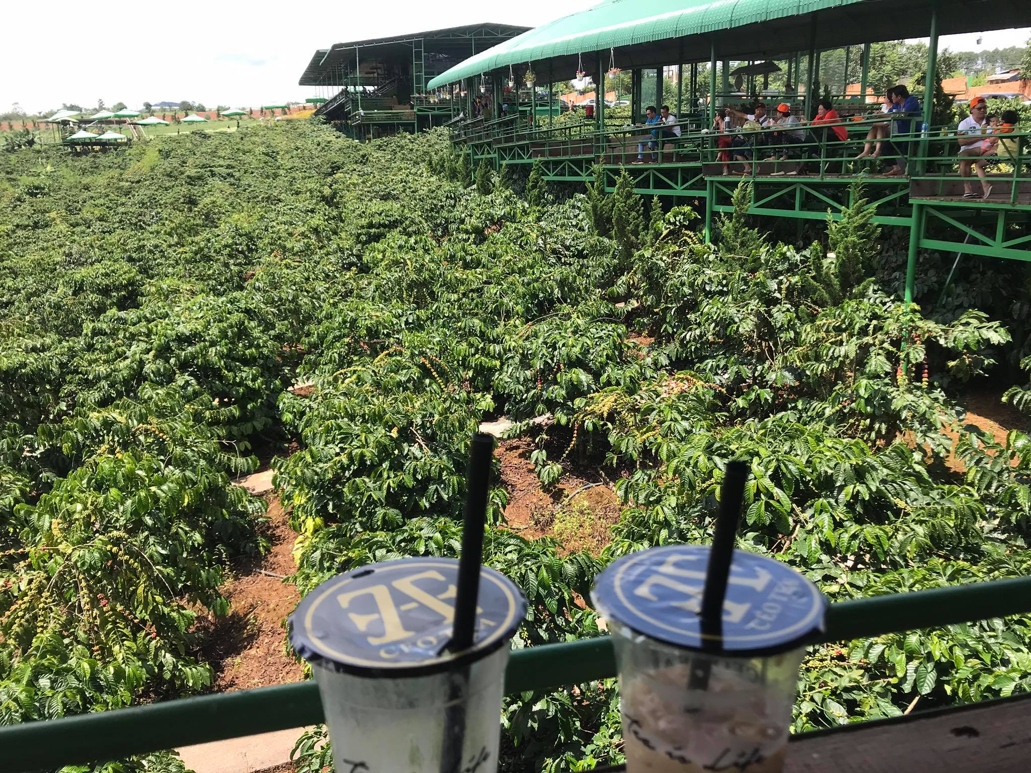 Chủ quán cà phê: Kinh doanh cà phê cần những gì?