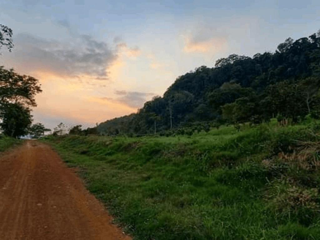Dịch vụ môi trường rừng: khái niệm, chính sách chi trả, gồm có loại nào, giá, cho thuê