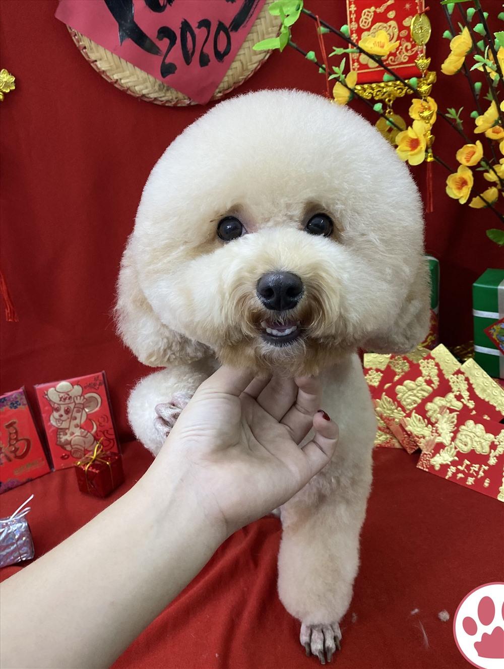 Dịch vụ chăm sóc thú cưng tại nhà, dịch vụ chăm sóc thú cưng là gì, dịch vụ chăm sóc thú cưng ngày Tết