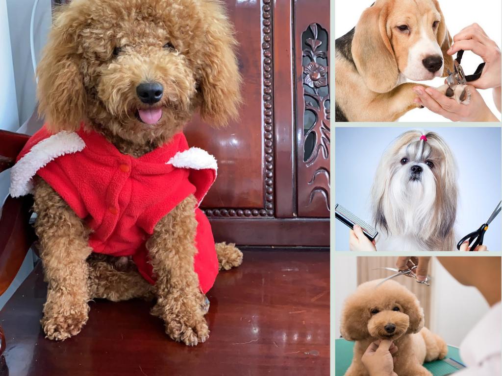 Dịch vụ làm đẹp cho thú cưng nở rộ, kiếm tiền