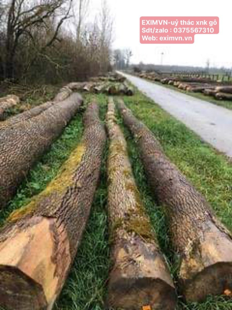 EXIMVN- chuyên ủy thác xnk gỗ rừng tự nhiên từ châu âu, phi, mỹ....
